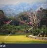 Beautiful Toraja